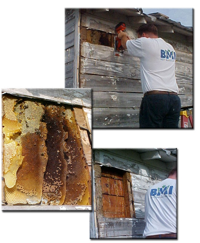 Safe Bee Removal
